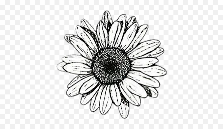 Background Black White Flower Cute Black And White Aesthetic Stickers Png Daisy Png Free Transparent Png Images Pngaaa Com