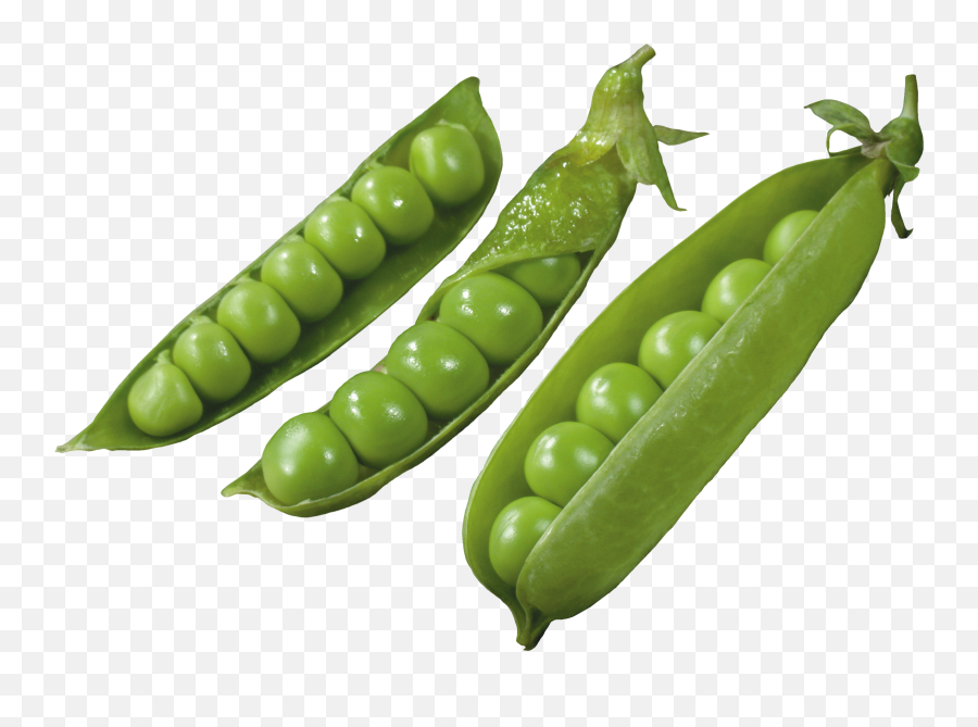 Download Three Pods With Peas Png Image - Pigeon Pea Png,Peas Png