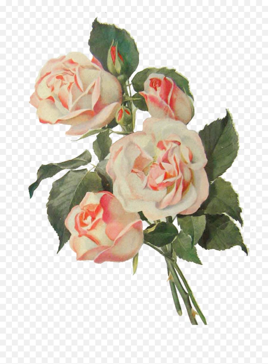 Vintage Flower Art Png 2 Image - Transparent Vintage Flower Png,Vintage Flower Png