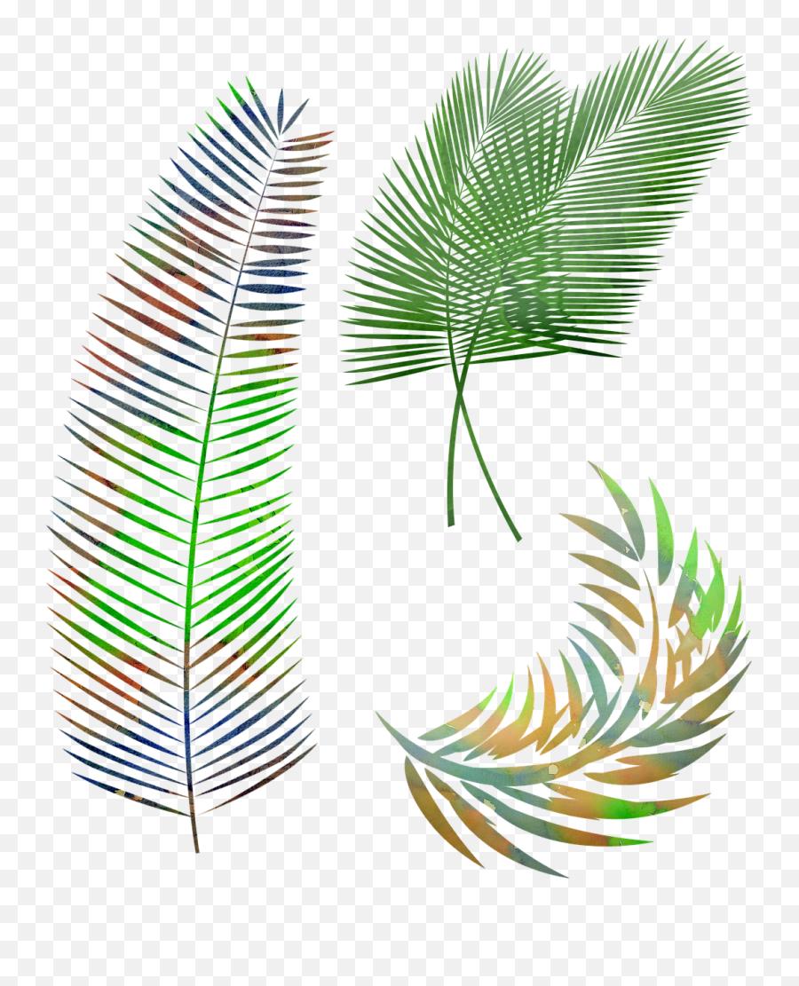 Watercolor Palm Leaves Leaf Gambar Daun Kelapa Hitam Putih Png Free Transparent Png Images Pngaaa Com