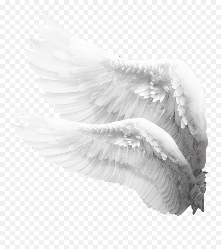 Sideview Angelwings Angels Angel Wings Feathers - Angel  Side Angel Wings Png