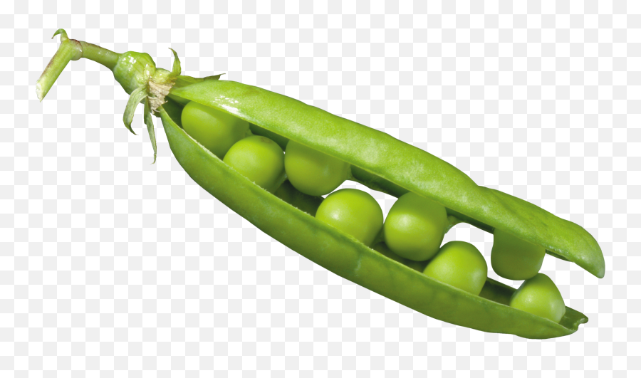 Peas In A Pod Png Image - Seed Dispersal By Explosion Peas,Peas Png