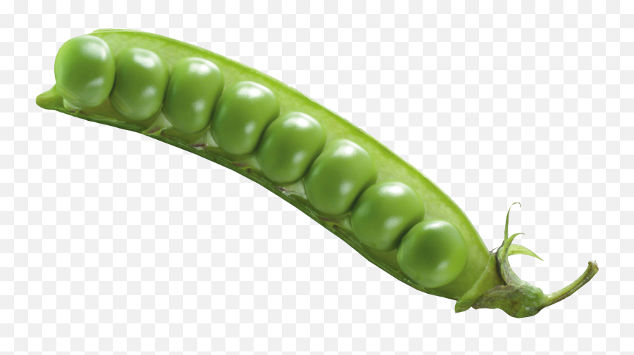 Pea Png Images Free Download - Green Bean Transparent Background,Peas Png