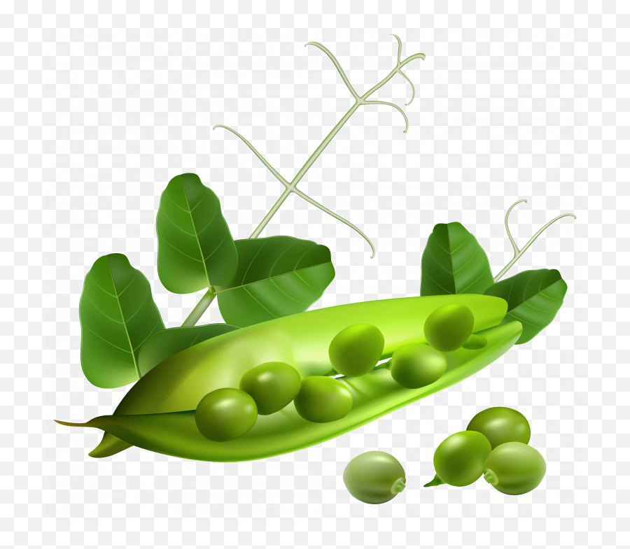 Pea Png Image Without Background - Peas Pod Png,Peas Png