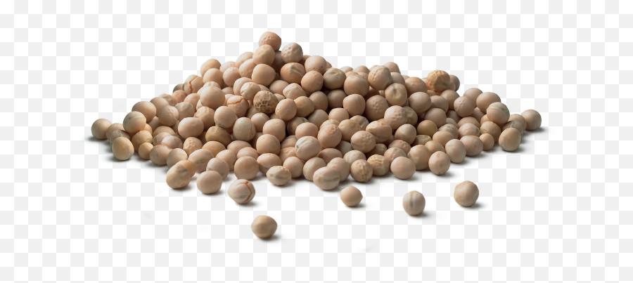 Dry Peas - Dry Peas Png,Peas Png