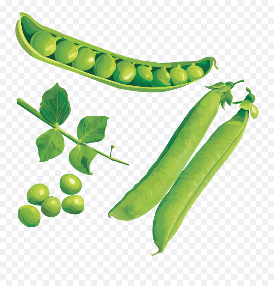Pea Png Picture Peas