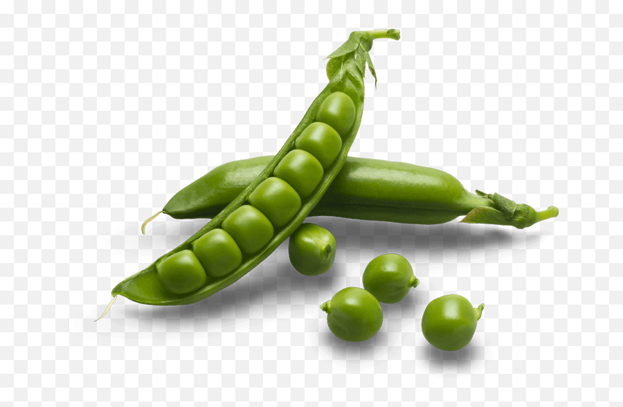 Egyptian Snow Peas For Export - Sugar Snap Peas Png,Peas Png