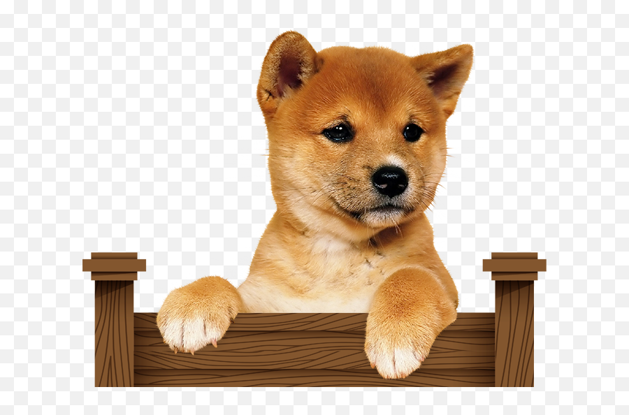 Shibe Pupper Transparent Png Clipart - Shiba Inu Puppy Transparent,Shiba Inu Png