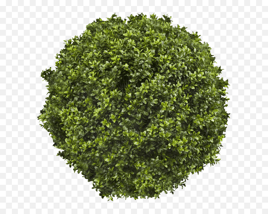 Topiary Png Trees Top View Png Tree Top View Png Free Transparent Png Images Pngaaa Com