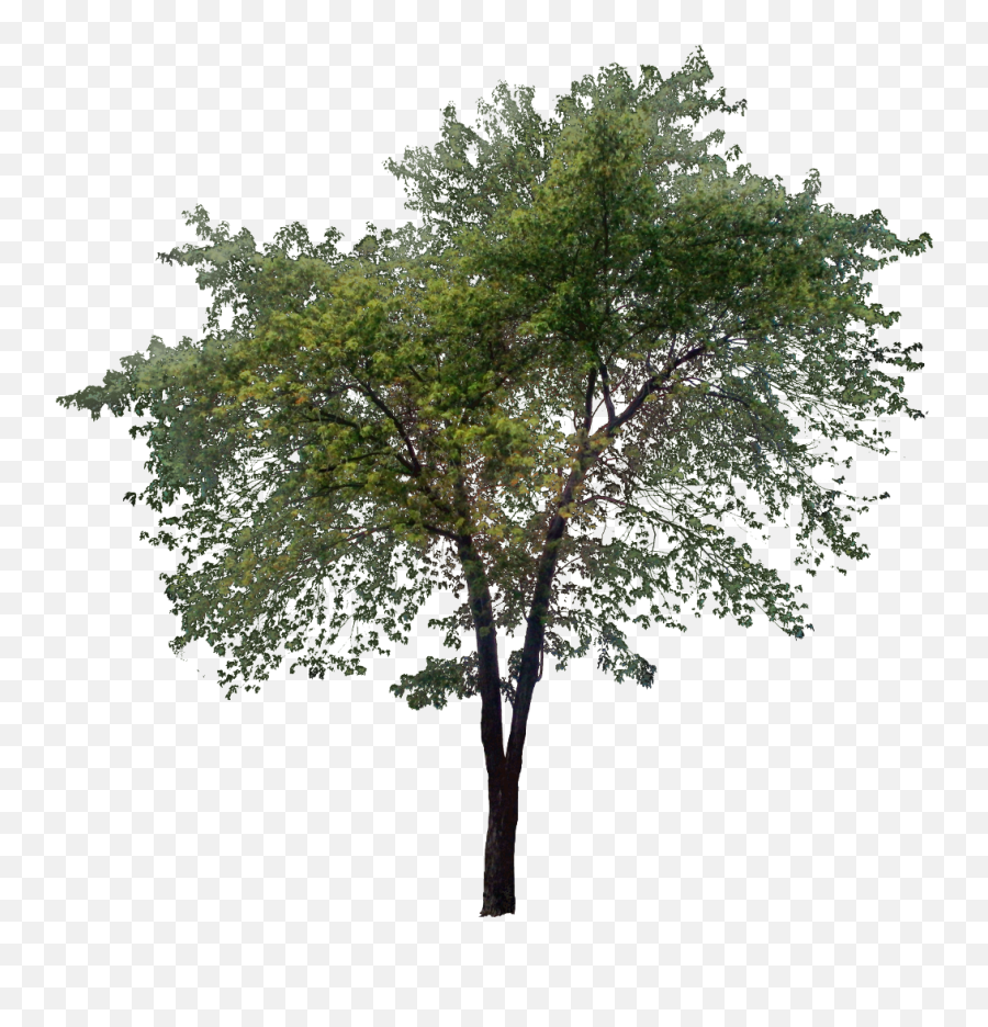 Download Trees Png - Transparent PNG  png images  Tree Png