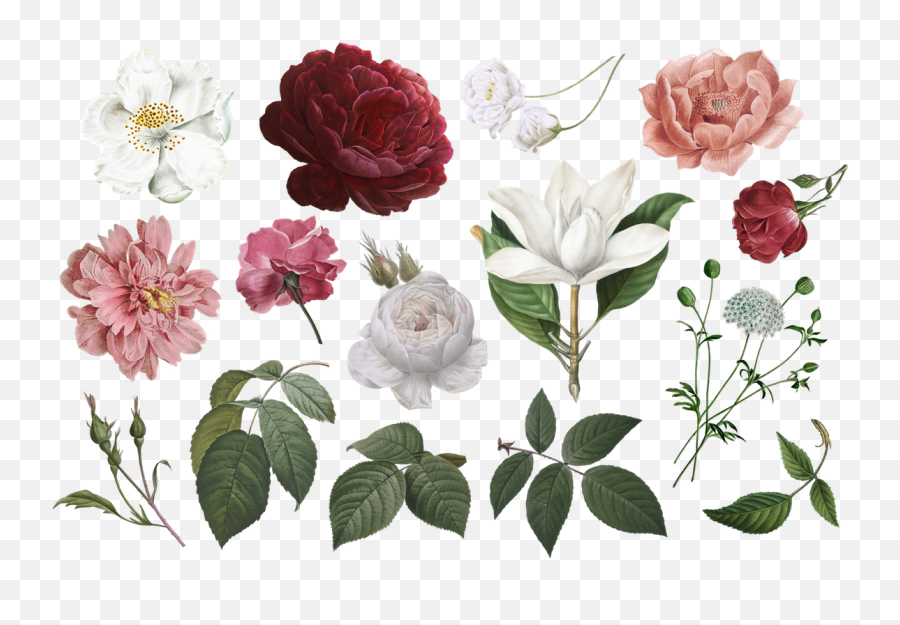 Free Vintage Flower Clipart Png Commercial Use In 2020 Flowers Clip Art Free Transparent Png Images Pngaaa Com