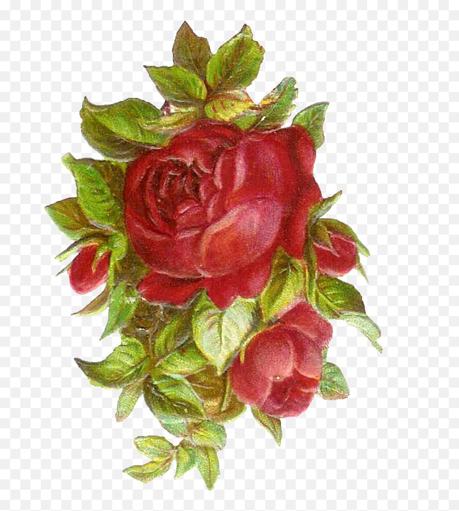 Library Of Vintage Flower Banner - Rosa Antigua Png,Vintage Flower Png