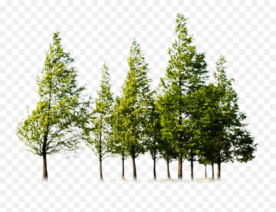 Forest Png Image Hd - Forest Tree Png,The Forest Png