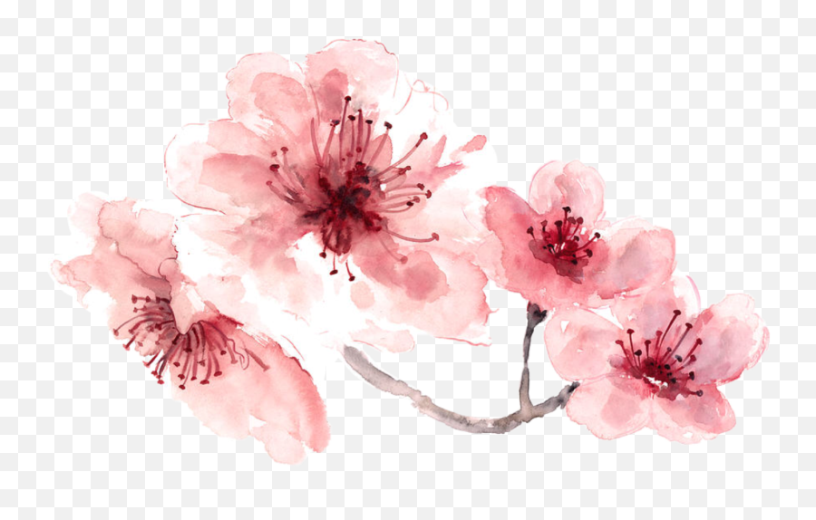 Download Pink Water Color Flower Png - Transparent Watercolour Flower Png