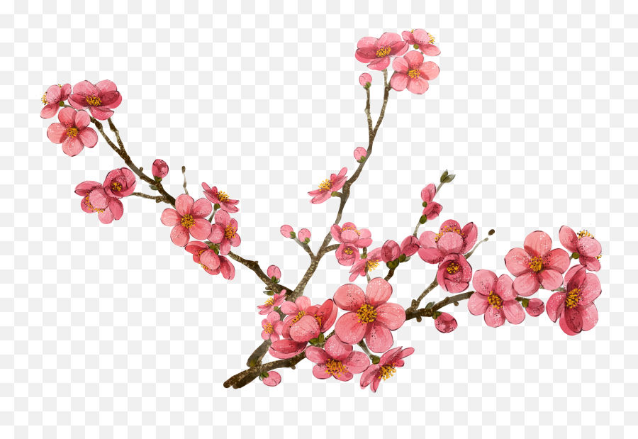 Library Of Plum Flower Picture Black - Transparent Cherry Blossoms Png