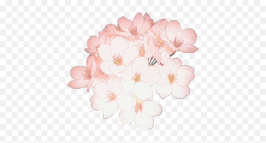 Download Flower Flowers Sakura - Transparent Anime Flower Png