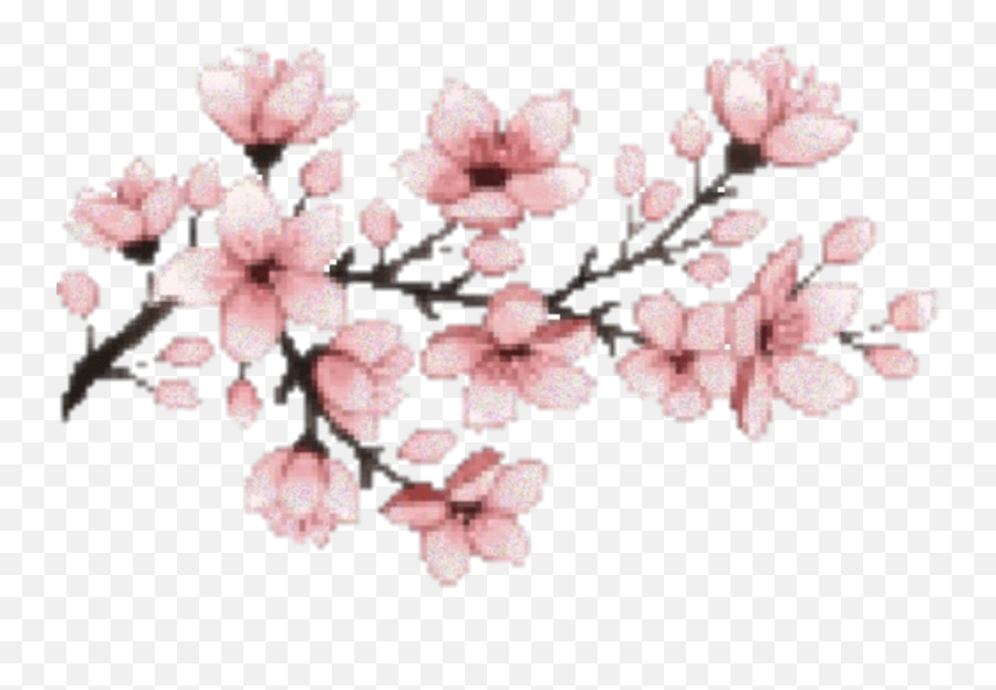 Download Hd Sakura Flower Hanami Pink - Cherry Blossom Gif Png