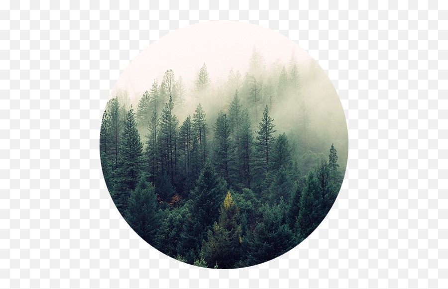 Society6 Ascension Wall Tapestry Png The Forest