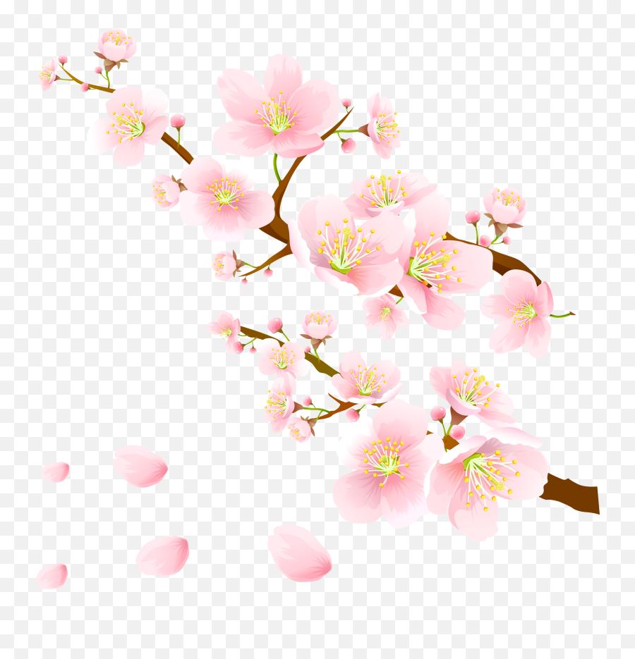 Sakura Pink Flowers Png Clipart - Hoo Hey How