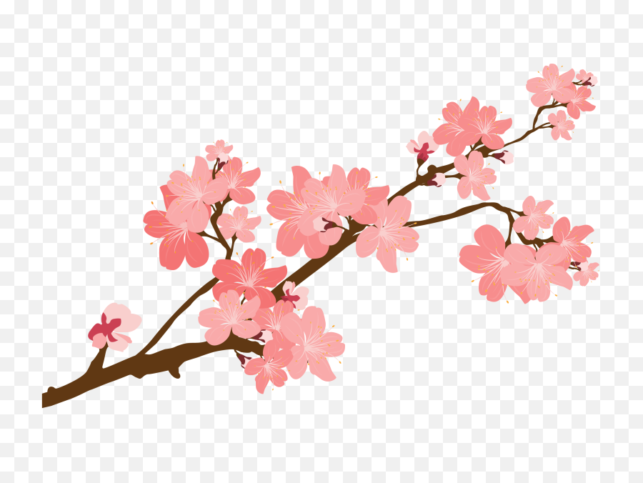 Cherry Blossom Clipart - Cherry Blossom Tree Branch png