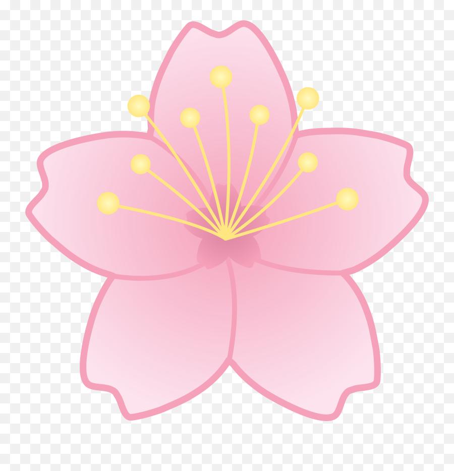Cherry Blossom - Cherry Blossom Flower Clip Art png