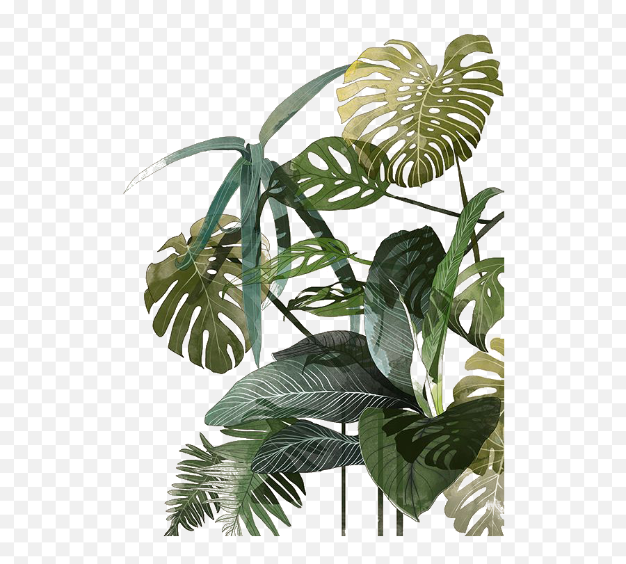 Download Leaf Botanical Illustration Watercolor Palm Tropics Plant Illustration Png Free Transparent Png Images Pngaaa Com Choose from over a million free vectors, clipart graphics, vector art images, design templates, and illustrations created by artists worldwide! download leaf botanical illustration