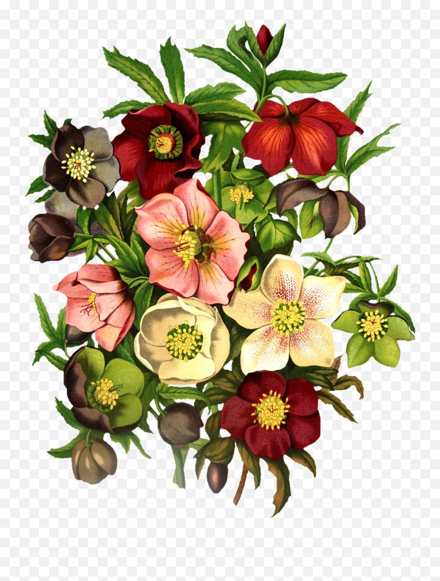 Vintage Floral Png - Black Hellebore Tattoo,Vintage Flower Png