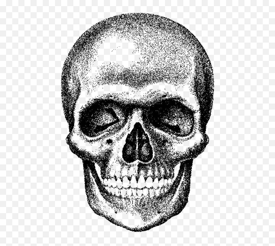 Skull Royalty - free  skull png download  568765  Free