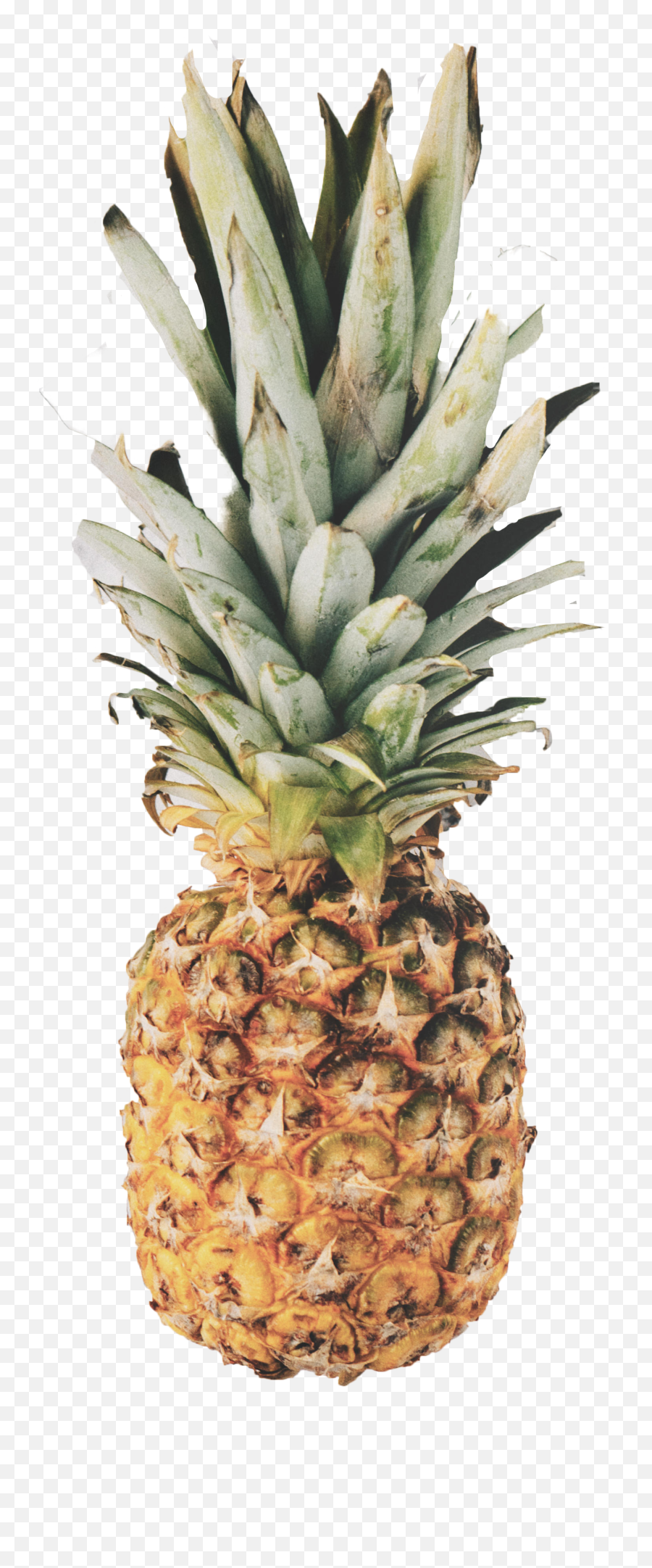 Download Pineapple Png Image For Free Marble Rose Gold Pineapple Free Transparent Png Images Pngaaa Com