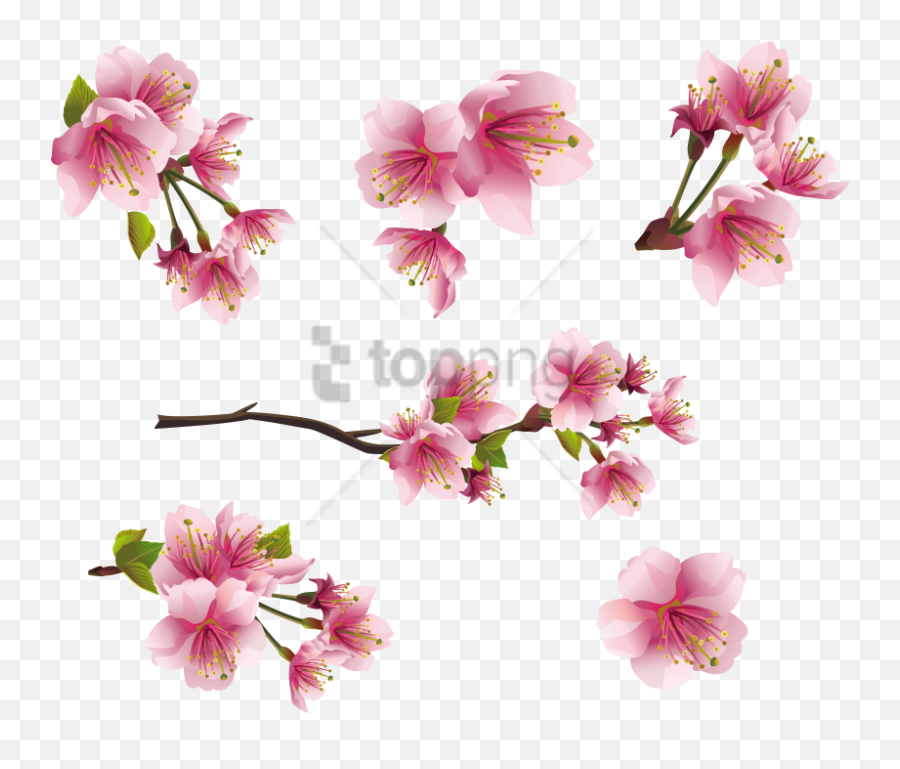 Download Free Png Spring Images Transparent - Peach Blossom Clip Art