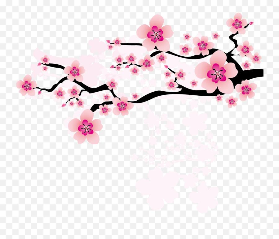 Ume Blossom Clipart Apricot - Japanese Cherry  Sakura Flower Png