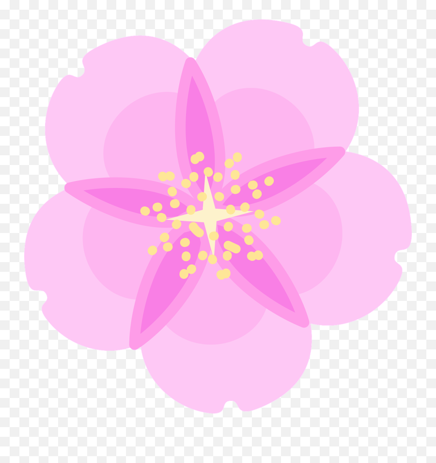 Cherry Blossom Flower Spring - Free vector graphic on Pixabay  Illustration png