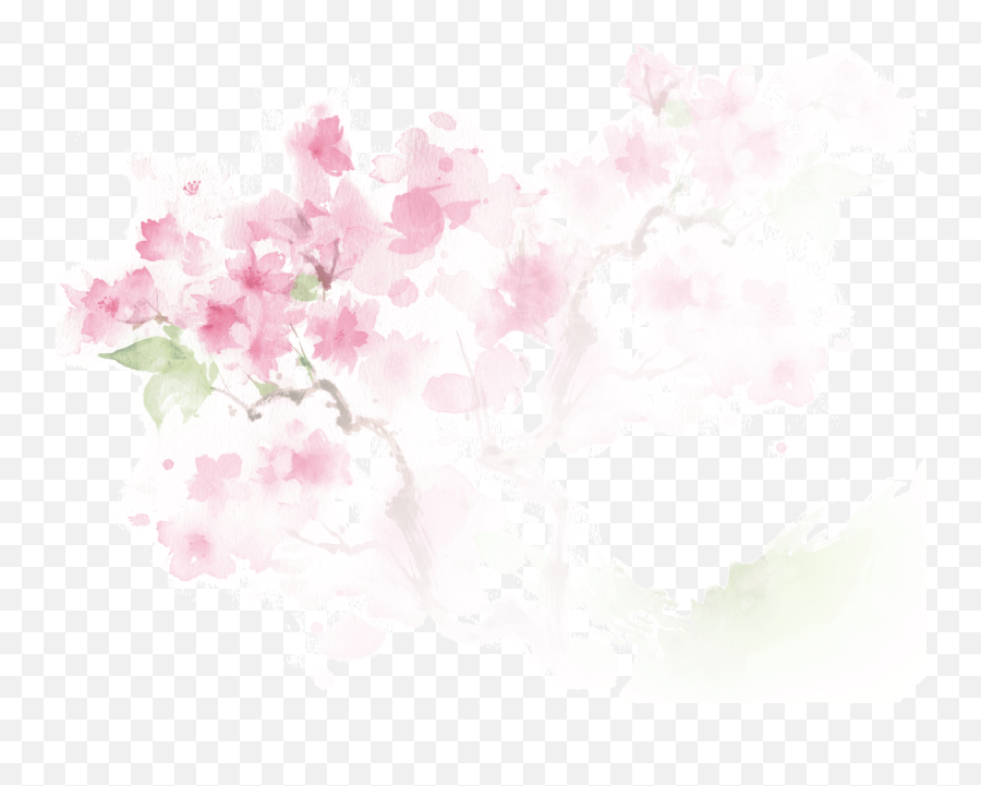 Cherry Blossom - Graphic Design png