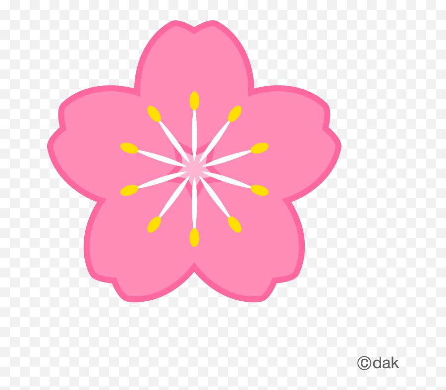 Flores De Sakura Png 3 Image - Flor De Cerezo Png