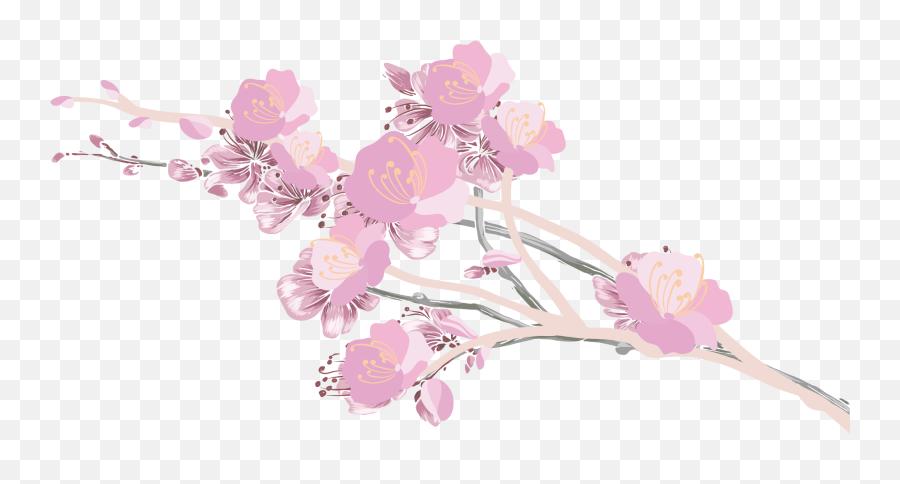 Cherry Blossom Petals Png - Cherry Blossom Clipart File  Cherry Blossom Clipart