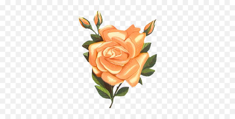 Library Of Vintage Flower Banner - Orange Vintage Flower Clip Art Png,Vintage Flower Png
