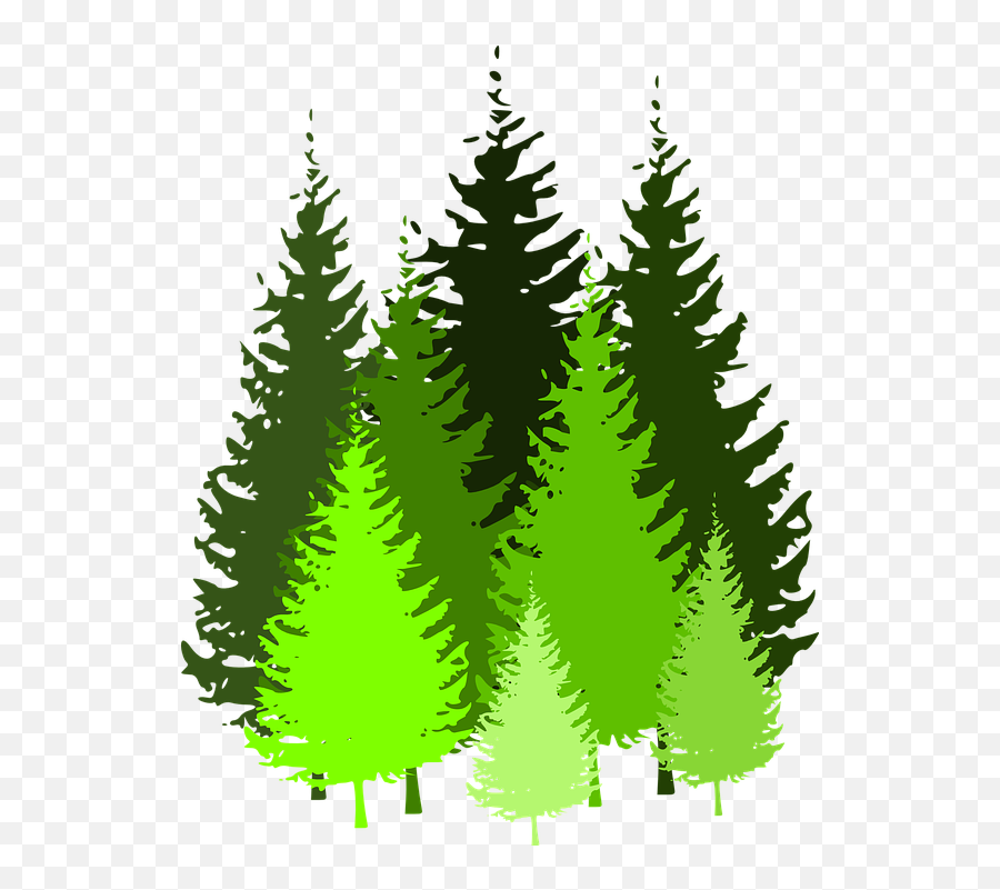 Cartoon Pine Trees 5 Buy Clip Art Pine Tree Silhouette Pine Tree Silhouette Png Free Transparent Png Images Pngaaa Com Populus nigra tree deciduous, tree, branch, plant, plane tree family png. cartoon pine trees 5 buy clip art