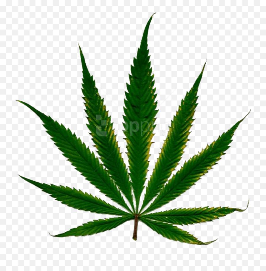 Cannabis Clipart Png Photo Images Daun Ganja Png Weed Transparent Background Free Transparent Png Images Pngaaa Com