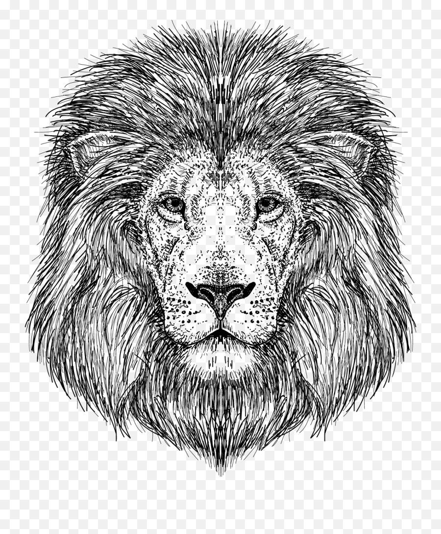 Transparent Lion Vector Clipart Dessin A Imprimer Gratuit Lion Png Free Transparent Png Images Pngaaa Com