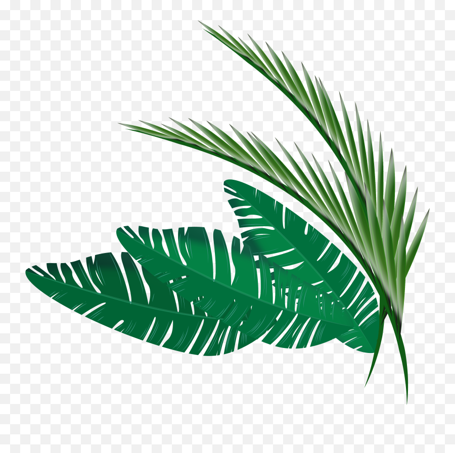 Transparent Leaf Border Png Clipart Transparent Tropical Leaf Png Free Transparent Png Images Pngaaa Com Polish your personal project or design with these tropical leaves transparent png images, make it even more personalized and more attractive. transparent leaf border png clipart