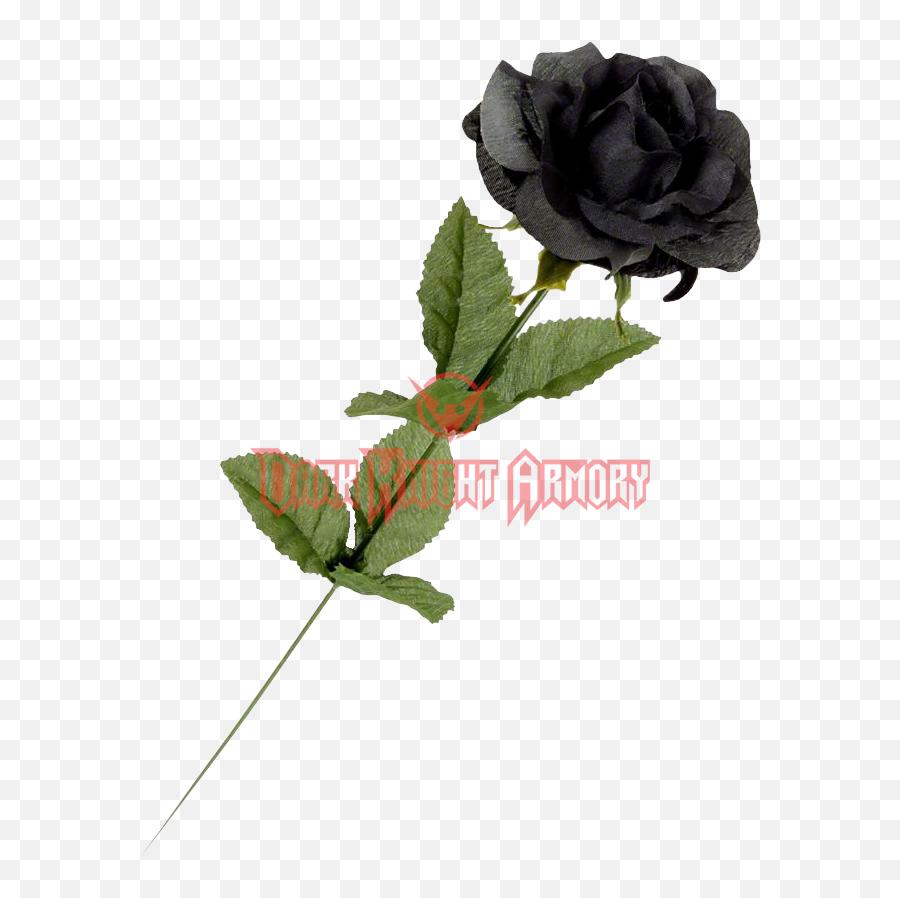 Single black picture free rose hoontoidly: Single