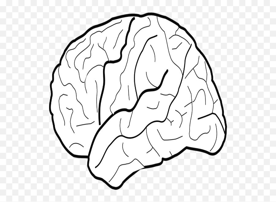 brain clip art transparent png image white brain clipart png free transparent png images pngaaa com pngaaa com