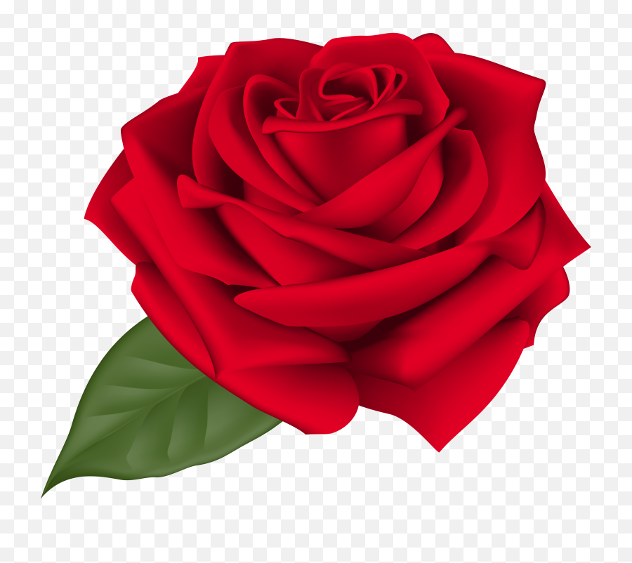 Rose Png Flower Images Free Download - Red Rose Images Png