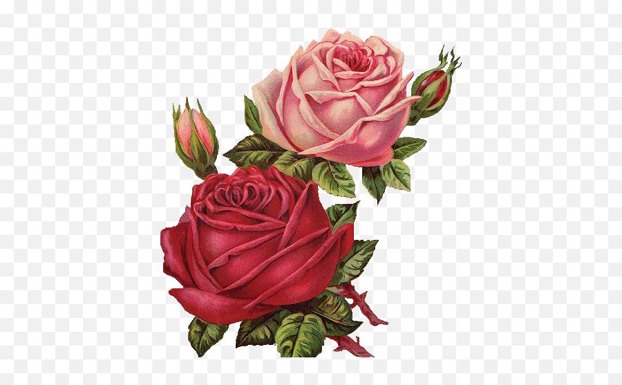 Download Red Rose Clipart Vintage - Flower Png Image Red Roses Vintage Png,Vintage Flower Png