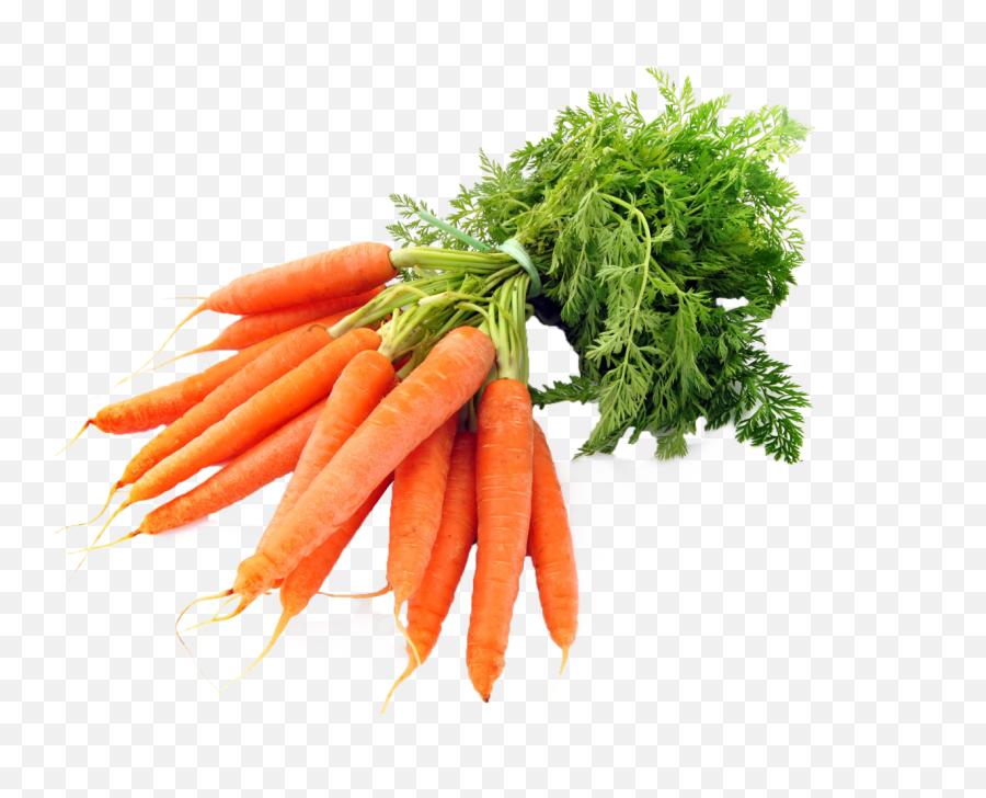 Carrots Png Image - Purepng Free Transparent Cc0 Png Image Carrots Png,Vegetables Transparent Background