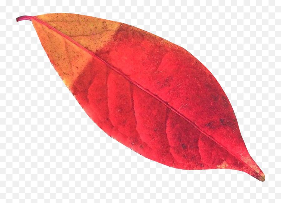 Autumn Leaf Png Transparent Image - Pngpix Pine Leaves Autumn Png,Autumn Leaves Png