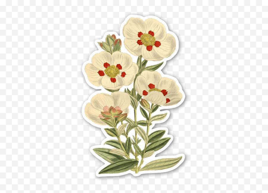 White Vintage Flowers - Stickerapp Flowers Vintage Png,Vintage Flower Png
