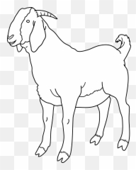 Free Printable Goat Coloring Pages For Kids | Cute goats, Coloring ... | 240x192