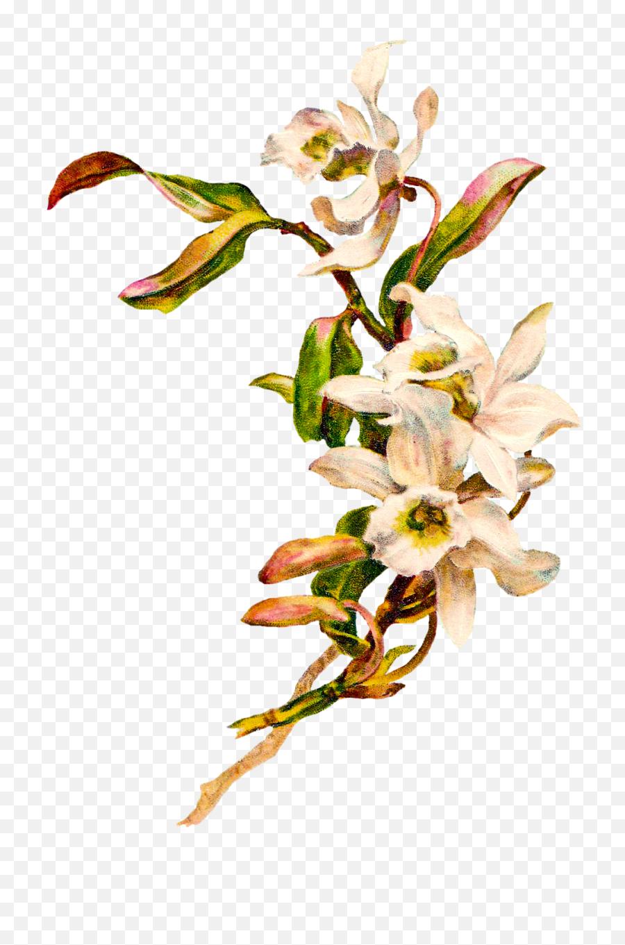 Vintage Flower Clipart Png - Vintage Flower Transparent,Vintage Flower Png