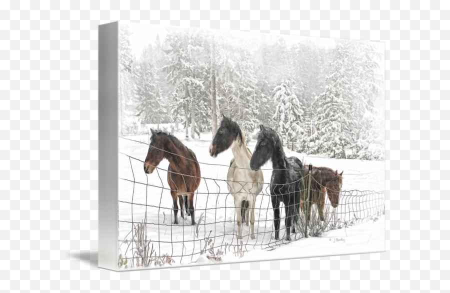 Horses In A Snowy Pasture By J Bentley - Sorrel png